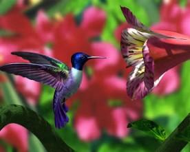 Colibri, Beija-flor