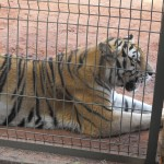 zoo de americana 111