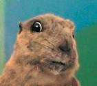 Este é Punxsutawney Phil e ele é uma marmota