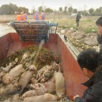 CHINA-POLLUTION-FARM-ANIMAL-PIG