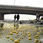 Inundacao do rio amarelo