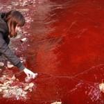 rio poluido que parece ser feito de sangue