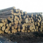 1358516475_474283796_2-Cavaco-de-madeira-toras-pinus-eucalipto-exportacao-comercial-exportadora-Sao-Francisco-do-Sul