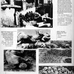 nanking_massacre_28486739