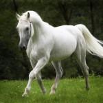 cavalos-selvagens-cavlos-580x394
