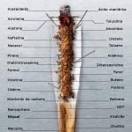componentes-cigarro