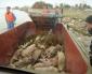 China – Os porcos flutuantes de Xangai
